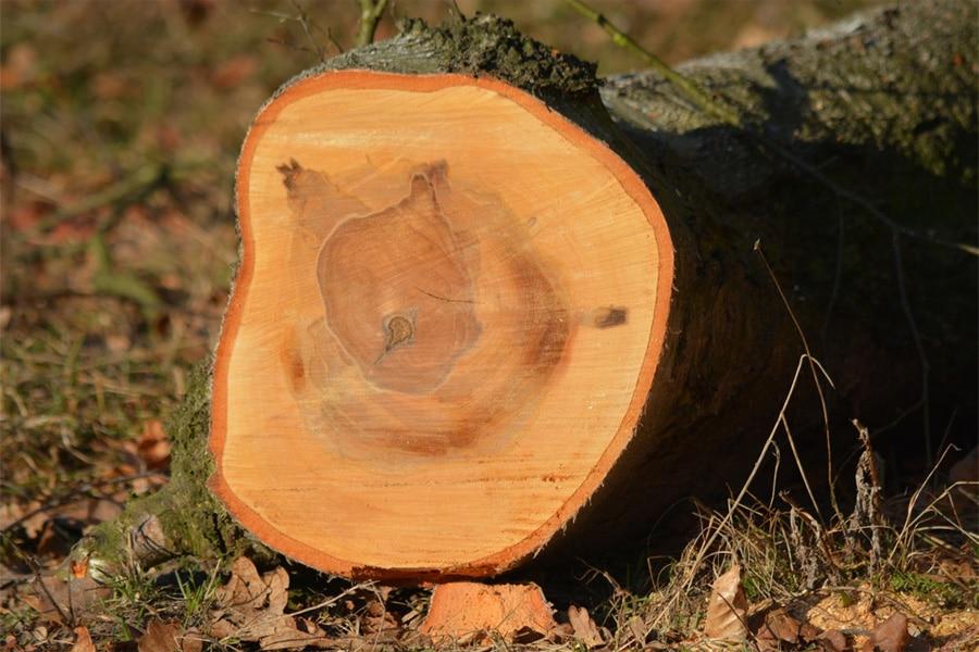 Tala de árboles en la comunidad de madrid