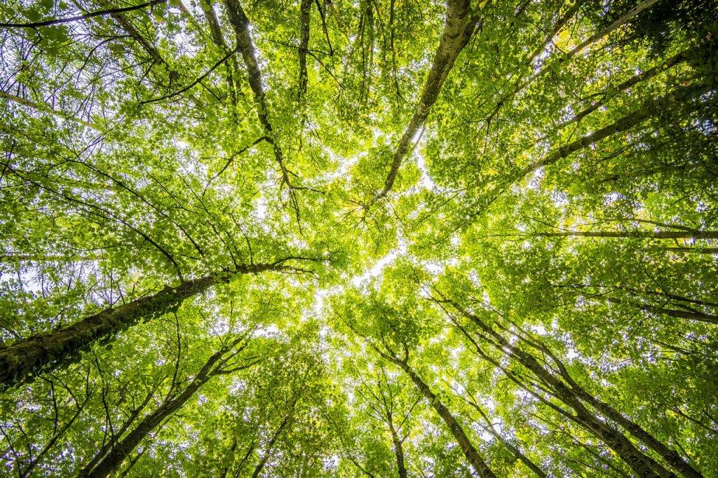 Es necesaria la poda de árboles en Madrid